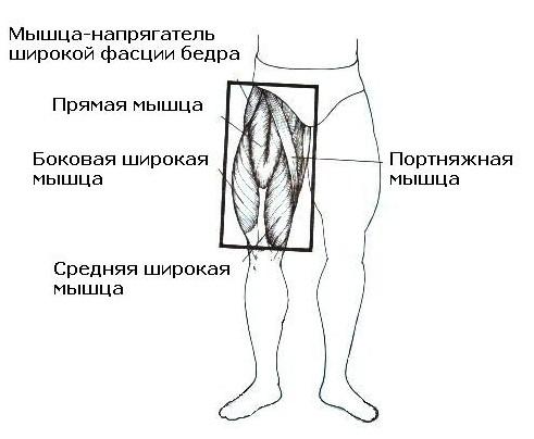 уупражнения для четырехглавой мыщцы бедив